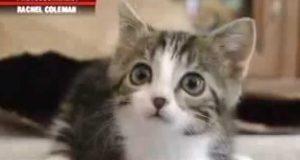 Denne kattens misdannelse knuste hjertet mitt, men hun er fast bestemt på å leve et normalt liv.