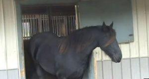 Hesten vår forsvant hele tiden, så vi satte opp et kamera for å finne ut hvordan… Og nå vet vi.