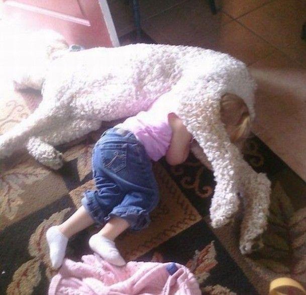 hund (18)