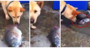 Hund ser døende fisk på bakken. Så gjør han noe utenkelig med dem.
