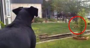 Hunden tok en rev på fersken i å leke med HANS leke i hagen. Reaksjonen er hysterisk.