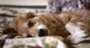 Hunden var nedfor og hun trodde han var døende. Men det som skjedde reddet hennes liv.