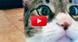Denne katten sniker seg inn og stjeler rampelyset – og det er hysterisk.