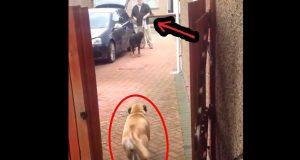 Det er vanskelig å tro hva denne hunden gjør når eieren kommer hjem fra butikken. Du må nesten se det selv.