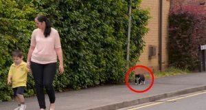 Hver dag følger denne katten den lille gutten til skolen. Når du ser hvorfor vil du få sjokk.