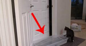 Katten kom seg rundt overalt i huset, så de TRODDE de kom opp med en genial plan…