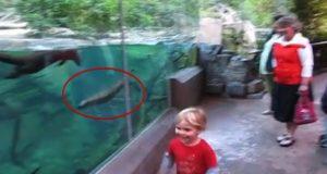 Da denne lille gutten lekte foran otertanken, forventet familien ALDRI det som kom til å skje.