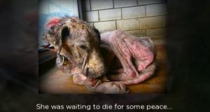 Denne hunden ville bare dø, men det skjedde ikke. Det som skjedde istedenfor vil sjokkere deg.