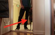 Han trodde at å få en hund kanskje ville hjelpe hans kone. Første gangen de møtes er SÅ spesiell.