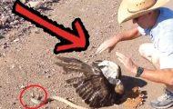 Denne mannen så en hauk i ferd med å bli drept av en slange. Du vil ikke tro hva han gjorde.
