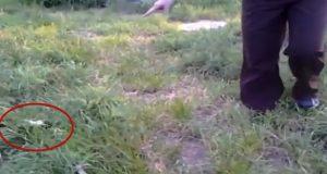 Vi så noe lite som fulgte etter oss i gresset, og fikk oss en mildt sagt UVENTET overraskelse.