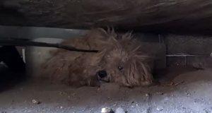 Da eieren døde ventet denne valpen et ÅR på at han skulle komme tilbake. Se den hjertevarmende historien.