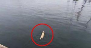 Denne hunden svømmer hver dag for å se kompisen sin. Men HVEM det er? Jeg så ikke den komme.