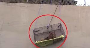 En fortvilet hund var innestengt uten håp om en vei ut. Så kom denne mannen til hans unnsetning. Wow.