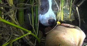 De TRODDE en hjemløs hund trengte å reddes. Men sannheten sjokkerte dem fullstendig.