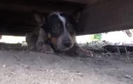 Denne hunden bodde under en container i 11 måneder. Redningshistorien hans er helt fantastisk.