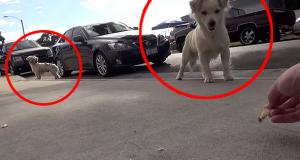 Det som er i ferd med å skje disse forelskede hundene vil gjøre deg målløs. Wow.