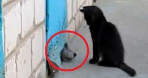 Valpen sitter fast inni veggen. Men se hva katten gjør. Ett minutt senere kunne jeg ikke tro det.