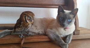 Denne katten og uglen har verdens mest unike og merkelige dyrevennskap. Jeg elsker det.