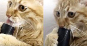Denne veloppdragne katten hilser på sin nye støvsuger-«venn» – Men se hva den gjør tilbake.