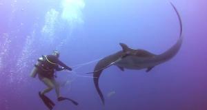 Da en gigantisk sjøskapning nærmet seg disse to dykkerne, ante de ikke at DETTE skulle skje.