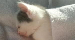 Denne kattens utrolige reise på bedringens vei kommer til å smelte hjertet ditt.