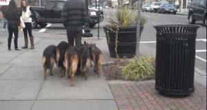 Ser ut som han bare lufter hundene. Men ved nærmere ettersyn fikk jeg meg en overraskelse.