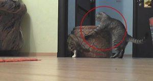 Kattunge mister leken sin. Så kommer pappakatt, aka SuperKatt til unnsetning.
