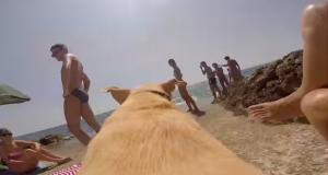 Dette er hunden Walter, og han simpelthen bare ELSKER vann.