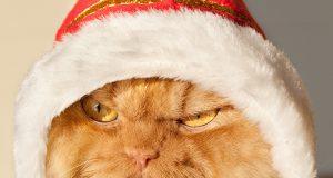Internettkjendisen «Grumpy Cat» kan ta seg en bolle. DETTE er verdens mest gretne katt.