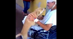 Hunden ventet i 8 dager utenfor sykehuset. Hans omfavnelse av eieren rørte alle.