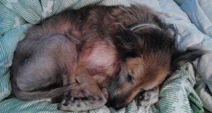 Ingen ville ha denne forlatte, 16-år gamle hunden. Så skjedde det noe vakkert og uforglemmelig.