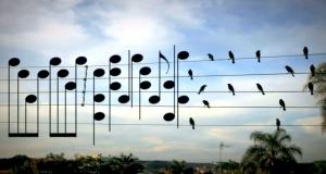 En mann tok dette fotografiet av fugler og gjorde om posisjonene deres til noter.
