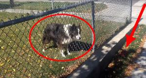 Det denne hunden gjorde med en fyr som gikk forbi er hysterisk genialt. Du må se det for å tro det.