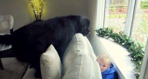 Når moren ber datteren gjemme seg, begir hunden seg ut på den mest komiske letingen etter henne.