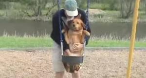 Når matfar plasserer hunden i husken, får hundens «smil» hele familien til å le.
