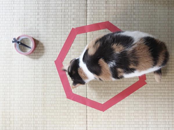 kattefelle5