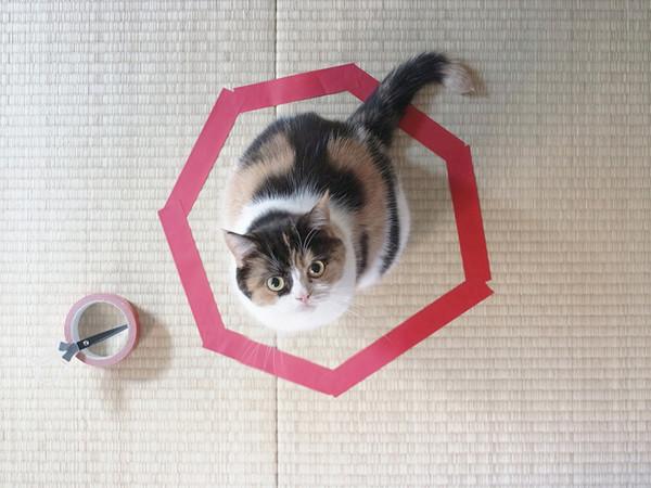 kattefelle6