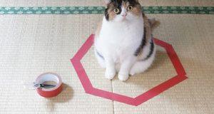 Her er de: Steg for steg-instruksene for hvordan fange en katt. Og det fungerer hver gang.
