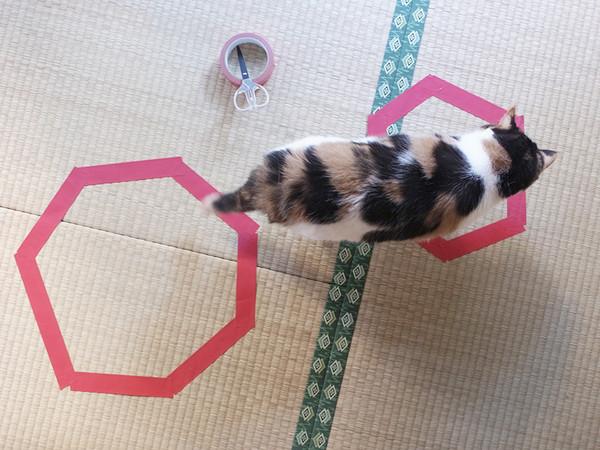kattefelle9