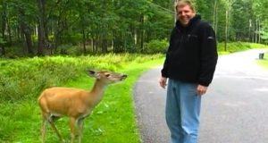 En hjort stakk hodet ut fra skogen, til denne mannens overraskelse. Vent til du ser hvorfor.