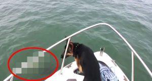 En hund legger merke til noe i vannet. Eieren får hjertet i halsen da han gjør DETTE.