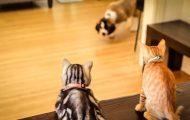Denne familien fikk en valp. Når du ser hva katten har å si om den, kommer du til å le.