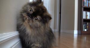 Katten fant et skjult kamera i huset… Du må bare se hva den gjør.