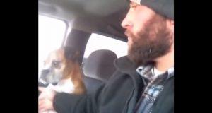 Han bare prikker hunden på brystet. Hundens reaksjon? Hvis blikk kunne drepe…