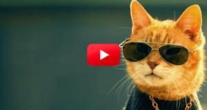 Kastrering er kult, bare spør denne katten. Alle katteelskere må få med seg denne videoen. LOL.