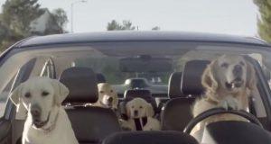 Her har du NØYAKTIG hva som ville skjedd hvis hunder kunne kjøre.