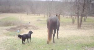 Da hesten deres begynte å oppføre seg som en gigantisk hund, ble selv eieren forbløffet.