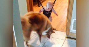 Denne babyen slutter ikke å hoppe. Det hunden gjør blir nesten for mye.