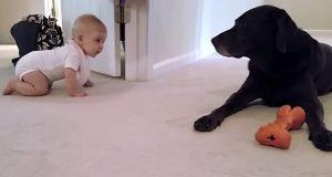 Foreldrene filmet babyens første kryping, men hunden deres gjorde øyeblikket ekstra spesielt.